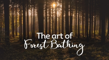 forest-bathing-blog