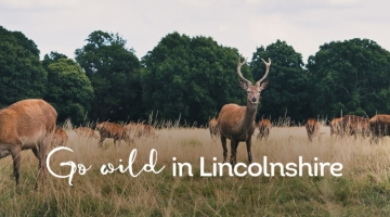 Optimized-lincoln-blog-header