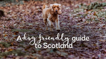 dog-guide-scotland-header