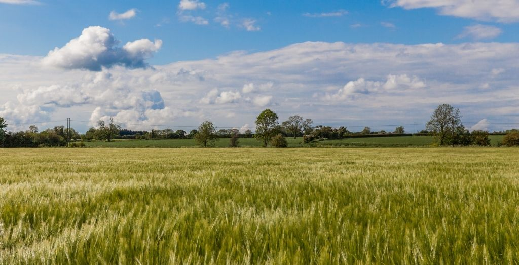 Field in Winceby in the Lincolnshire Wolds